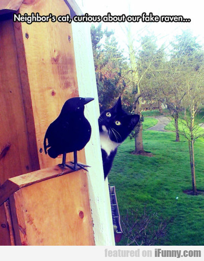 Neighbor's Cat, Curious About Our Fake Raven..