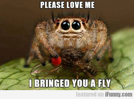 Please Love Me, I Bringed You A Fly...