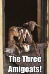 The Three Amigoats