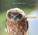Bad Feather Day...