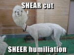 Shear Cut Sheer Humiliation