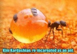 Kim Kardashian, Re-incarnated As An Ant