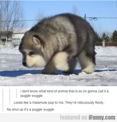 i dont know what kind of animal that is