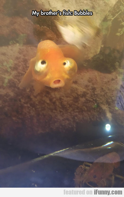 My Brother's Fish: Bubble...