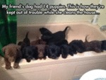 My Friend's Dog Hat 14 Puppies. This Is How
