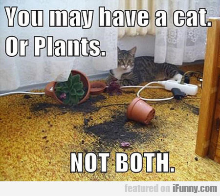 You May Have A Cat. Ot Plants. Not Both
