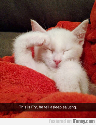 This Is Fry, He Fell Asleep Saluting