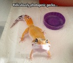 Ridiculously Photogenic Gecko
