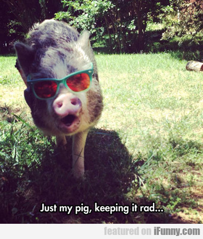 Just My Pig Keeping It Real...