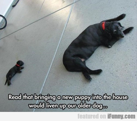 Read that bringing a new puppy into the house..