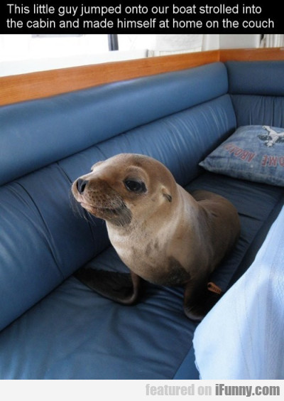 This Little Guy Jumped Onto Our Boat