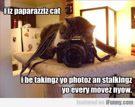 I Iz Paparazziz Cat I Be Takinz Yo Photoz
