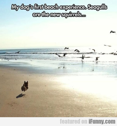 My Dog's First Beach Experience. Seagulls Are..