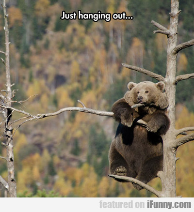 Just Hanging Out...