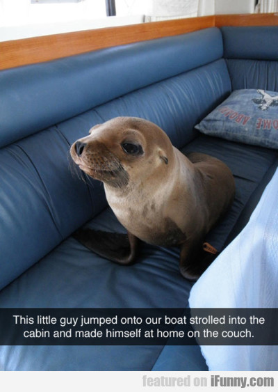 This Little Guy Jumped Onto Our Boat Strolled...