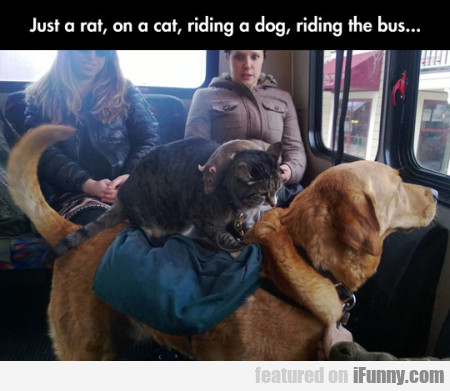 Just A Rat, On A Cat, Riding A Dog, Riding The Bus
