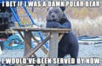 I Bet If I Was A Damn Polar Bear I Would've Been..