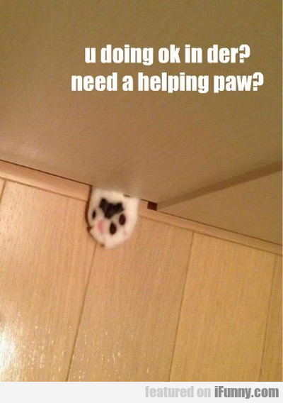 U Doing Ok In Der? Need A Helping Paw?