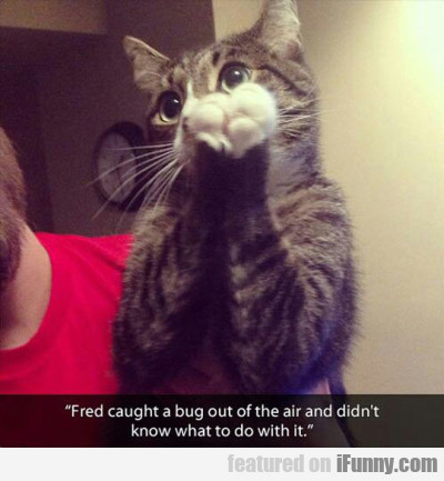 Fred Caught A Bug Out Of The Air And Didn't...
