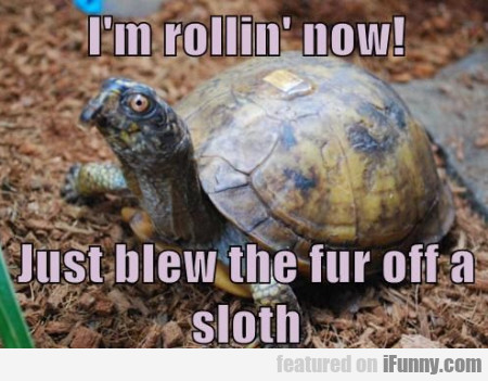 I'm Rollin' Now. Just Blew The Fur Off A Sloth