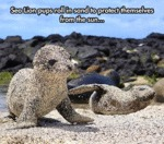 Sea Lion Pups Roll In Sand...