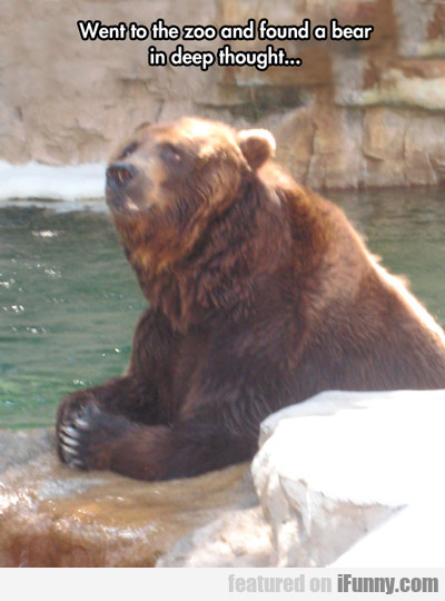Went To The Zoo And Found A Bear...