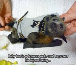 Baby Bat In A Batman Sock...