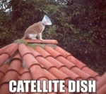 Catellite Dish