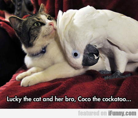 Lucky the cat and her bro, Coco the cockatoo