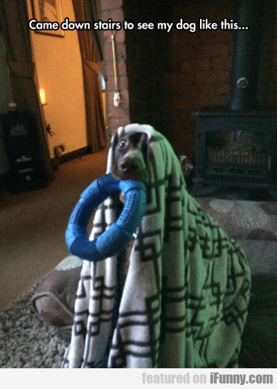 Came Down Stairs To See My Dog Like This...