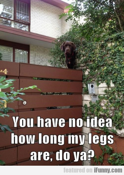 You Have No Idea How Long My Legs Are...