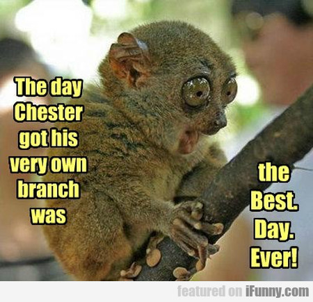 the day chester got his very own