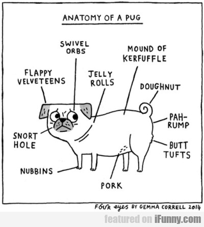 Anatomy Of A Pug - Swivel Orbs...