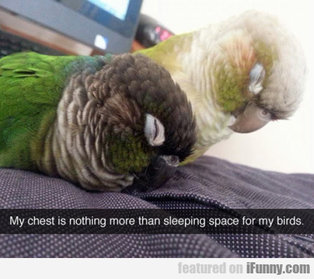 My Chest Is Nothing More Than Sleeping Space