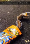Squirrel Steals And Runs Away With My Cheeto...