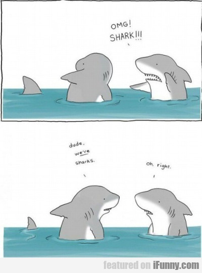 OMG! Shark!!! Dude we're sharks. Oh, right..