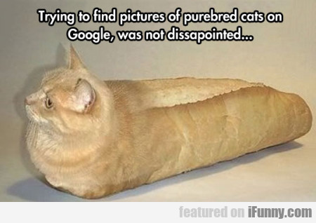 Trying To Find Pictures Of Purebred Cats On..