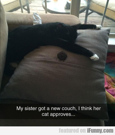 My Sister Got A New Couch, I Think Her Cat...