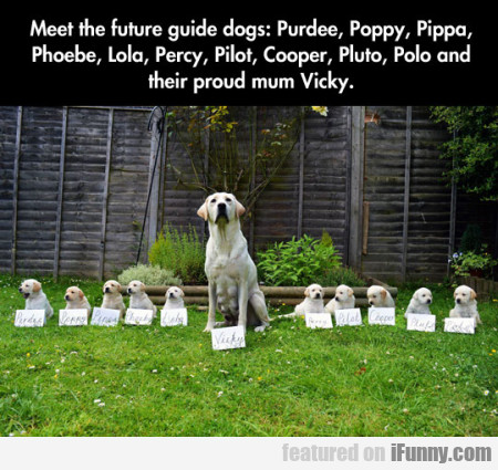 Meet The Future Guide Dogs - Purdee, Poppy...