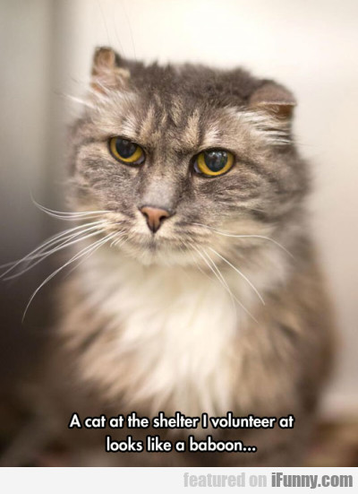 A Cat At The Shelter I Volunteer At Looks...