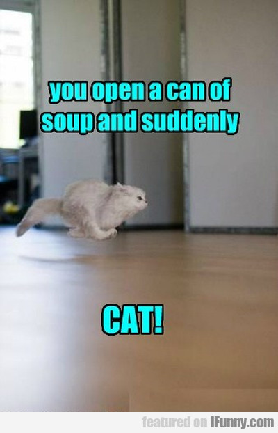 You Open A Can Of Soup And Suddenly...cat