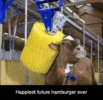 Happiest Future Hamburger Ever