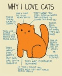 Why I Love Cats - They Like To Give..
