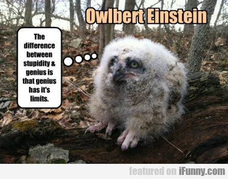 Owlbert Einstein - Difference Between Stupidity..