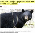 Bear Falls Through Skylight...
