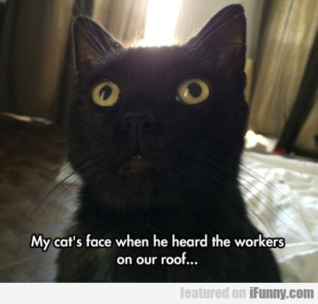 My Cat's Face When He Heard The Workers..