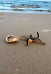 A Live Starfish On The Beach...