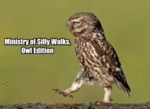 Ministry Of Silky Walks, Owl Edition