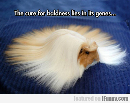 The Cure For Baldness Lies In Its Genes...