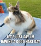 Let's Just Say I'm Having A Good Hare Day